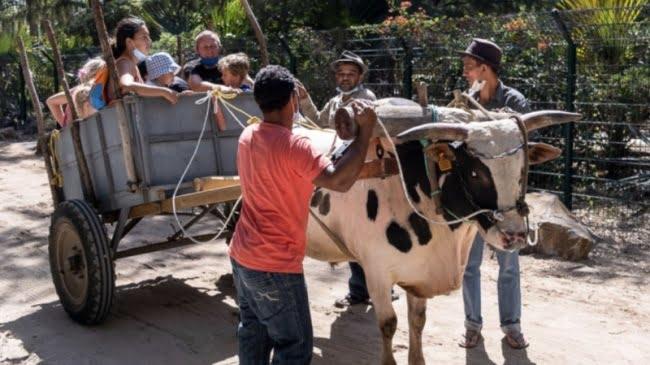 Semaine du développement durable : Saint-Paul : quad-bike, hoverboard, charrette boeuf, la …